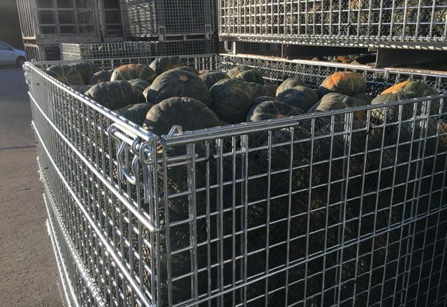 南瓜の収穫と出荷にメッシュタイプ鉄コンテナM-1を利用