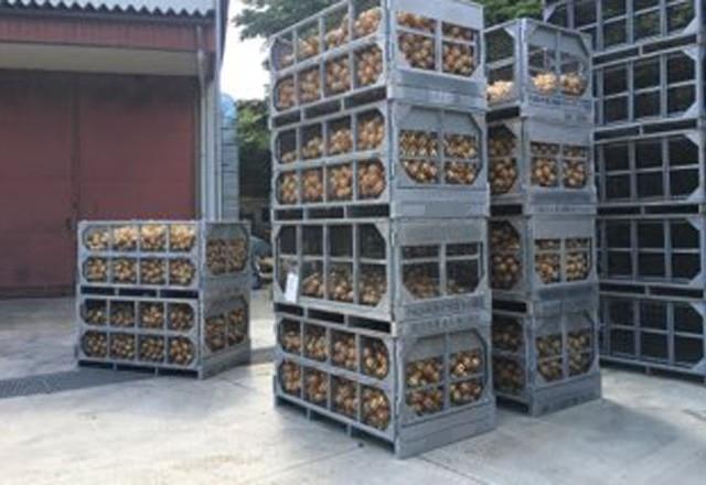 玉ねぎをスチールタイプ鉄コンテナで集荷