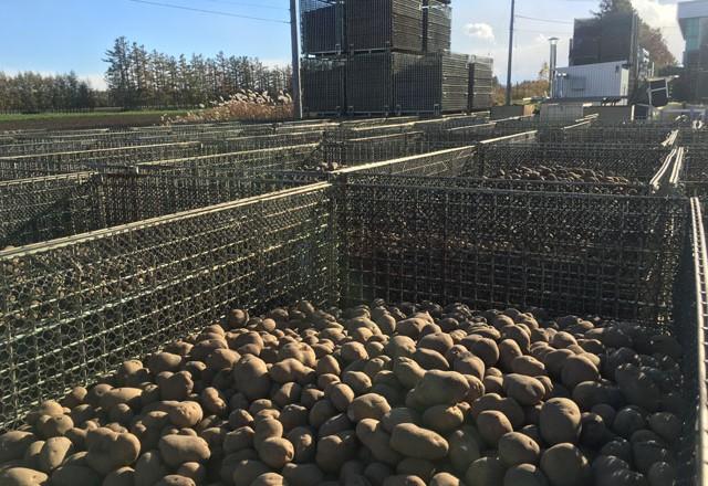 収穫した馬鈴薯 メッシュタイプの鉄コンテナM-1