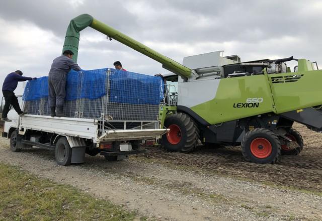 大豆収穫 ホッパー型鉄コンテナPOP