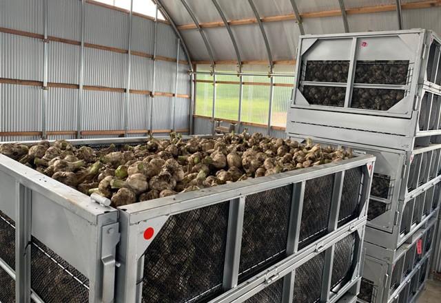収穫したニンニクを鉄コンテナに収容。このまま乾燥工程へ。