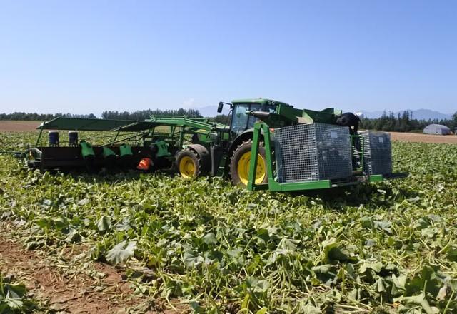 メッシュコンテナで南瓜の収穫 海外製大型収穫機