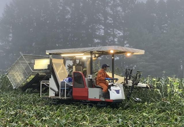 メッシュコンテナでスイートコーンの収穫