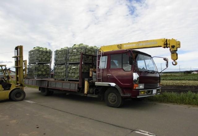 キャベツの収穫から輸送までを鉄コンテナで